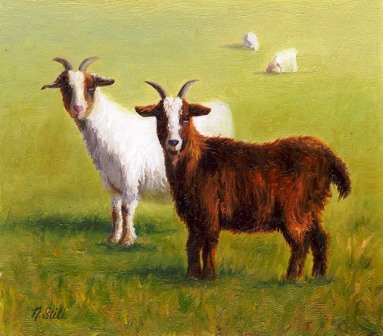 Still Mini TwoGoats